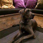 la meuse hondenhotel